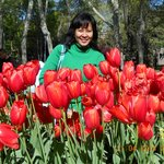 wonderfull tulips and me