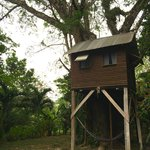 One of the tree houses.