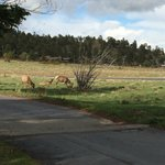 Elk right around the corner