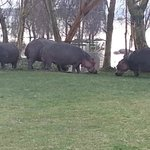 The nearby lake attracts hippos