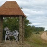 Photo of Ruaha Hilltop Lodge