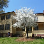 Mordecai house and dogwood tree