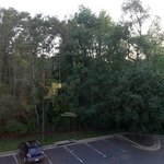 View of woods in back of property from Room 317