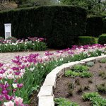 path leading to the rose garden
