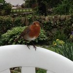 Friendly robin at Rockcliffe Tea Rooms