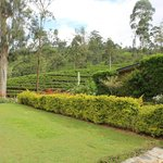 Foto Ceylon Tea Trails