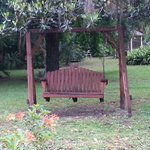 Swing seat under the big Magnolia tree in the yard.