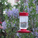 Hummingbirds on the front porch