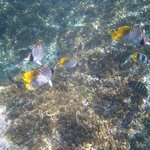 Amazing tropical fish & snorkelling