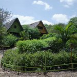 Photo of Chirije Ecolodge