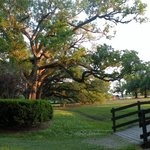 Oak Alley Plantation resmi