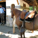 Ranch horse with Argentinian tack