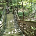 Steps down to nearby sink hole at Devil's Millhopper Geological State Park
