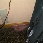 Foto de Econo Lodge College Park
