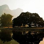 Photo of Big Banyan Tree in Yangshuo County, Guilin