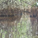 Everglades Rentals & Eco Advent