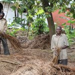 Preparing thatch for roof