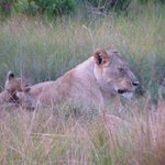 Foto de Sibuya Game Reserve & Tented Camp
