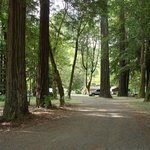 Giant Redwoods RV & Camp