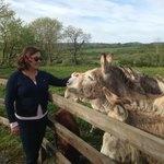 My wife with donkeys just prior to climbing in and feeding them.