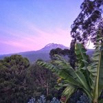 Mount Kilimanjaro View Lodge의 사진