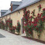 Roses cover the outside of the main building in summer