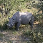 Rhino next to road!