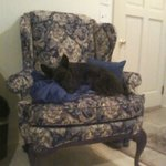 My dog William resting on the Queen Anne chair