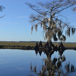 St Johns Airboat River Tour