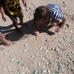 Kids Catching Crabs