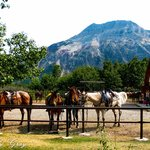 Alpine Stables Day Tours