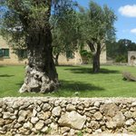 Photo de Masseria Pizzofalcone Relais