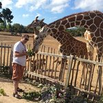 Feeding the giraffes at Calauit
