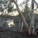 Murchison River - View from the campsite