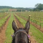 A new view of the vines ....