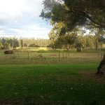 Bilde fra Hunter Valley Resort