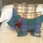 Harris Tweed Dog on bed!