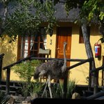 Foto de Thornhill Safari Lodge
