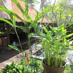 Kayumanis Ubud Private Villa & Spa resmi