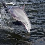 A-Pair-A-Dice Charters - Private Tours