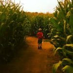 Family Fun in the Maize