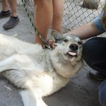 Shy Wolf Sanctuary: Real life interactions with actual wolves.