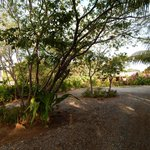 Guava Grove Private Road b