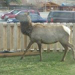 Foto de Yellowstone Gateway Inn