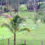 Foto Sunway Farm Bed and Breakfast