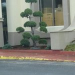 Entry to hotel, garbage, cardboard boxes, beat up curbs