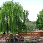 Willows on the lake