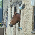Our very friendly neigh......bour