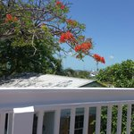 Foto Key West Harbor Inn