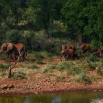 Bilde fra Royal Madikwe Exclusive Safari Residence